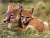 fox-14