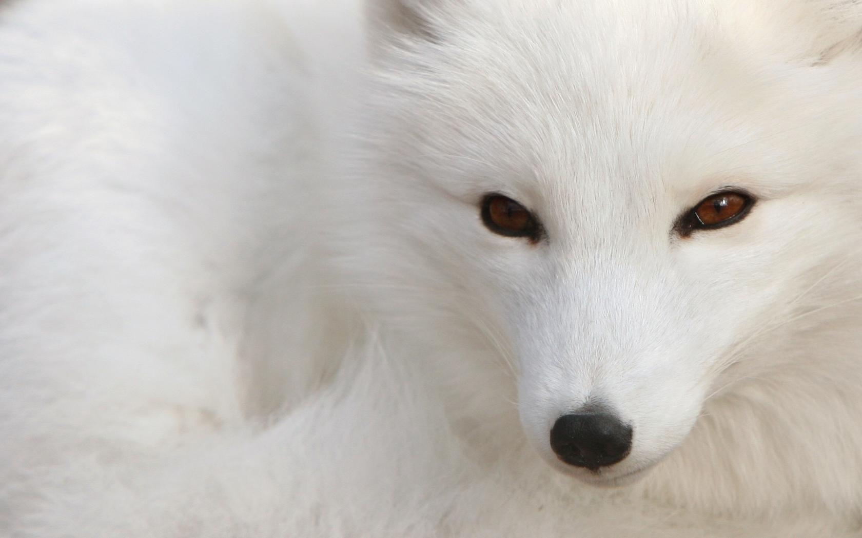 whitelove-29