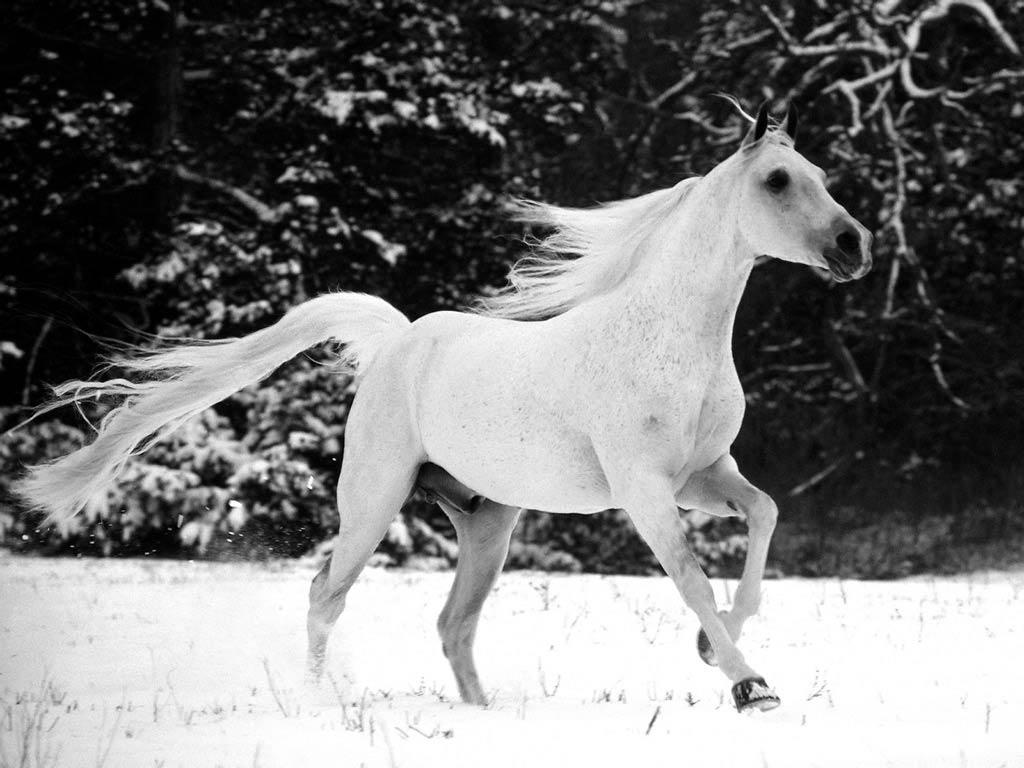 whitelove-32