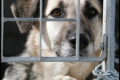 Per ogni cucciolo comprato, un cane nei rifugi muore.