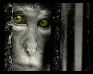 Scopri chi finanzia la vivisezione e chi no.