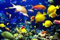 """""""Sono andata a fare delle immersioni e ho visto con quanta gentilezza i pesci ci accolgono nel loro mondo,"""