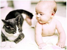Gatti randagi salvano la vita a un bimbo