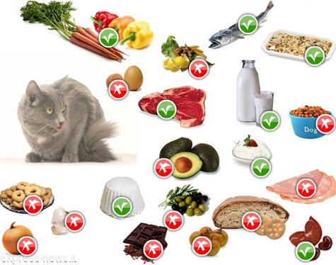 I cibi che fanno bene a fido e felix qualit e quantit for Quali verdure possono mangiare i cani