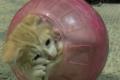 Il gattino che si credeva un criceto!