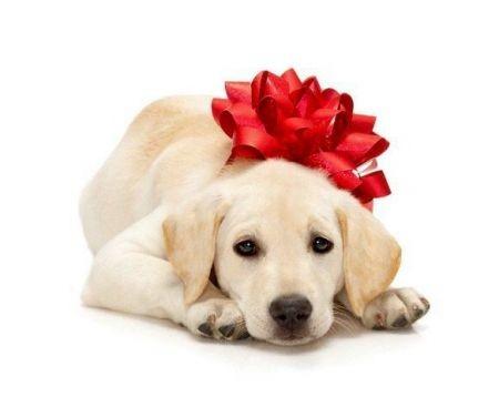 Gli animali non son regali vegamami for Animali a natale