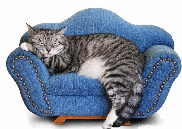 Non sai come arredare casa chiedi al micio vegamami - Posizioni sul divano ...