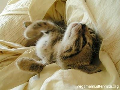 Un gatto ti permette di dormire sul letto vegamami - Gatto pipi letto ...