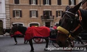 i cavalli delle botticelle