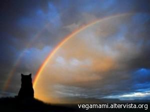 il nostro gatto va in paradiso