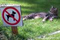 Toscana: cani ammessi in tutti gli esercizi pubblici!