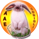 avatar for aae_onlus