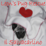 Leon's Pug Rescue Salvacarlino