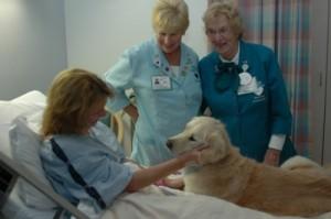 cani-ospedale; fonte: vitadamamma.com