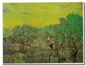 contadini_che_raccolgono_olive