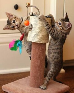 gatti_che_giocano