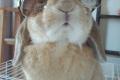 I conigli odiano il caldo
