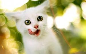il gatto matto
