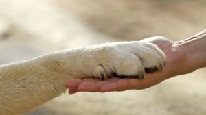 animali-e1391777261114
