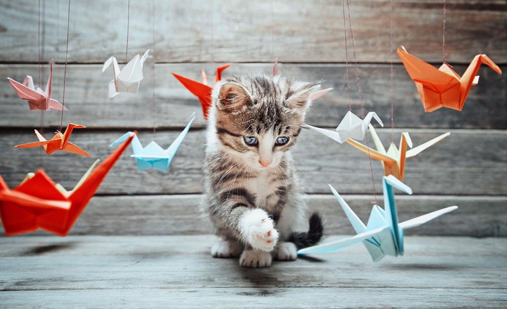 Come allontanare i gatti dal proprio giardino vegamami - Allontanare i gatti dal giardino ...