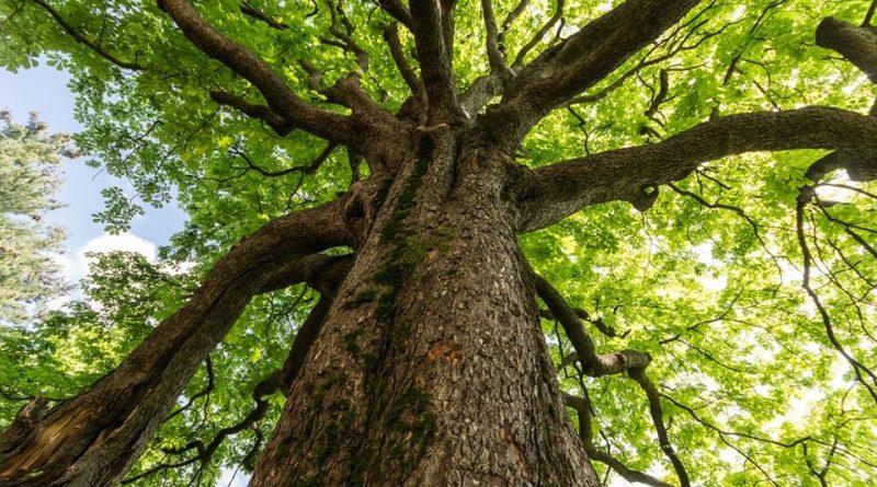 abbraccia-un-albero