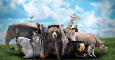 amare-animali